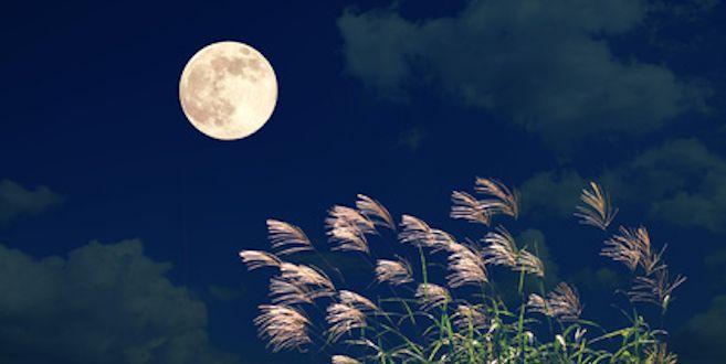 5 Things I'm Releasing for the Full Moon in Sagittarius