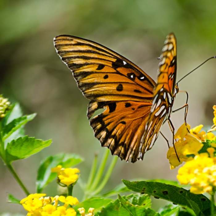 Butterflies as Spirit Guides and Faith Over Fear