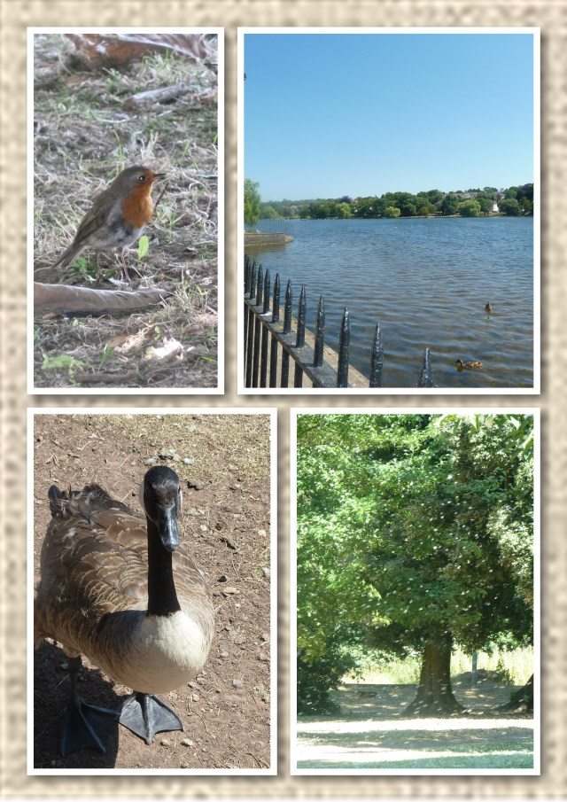 The lake and wildlife