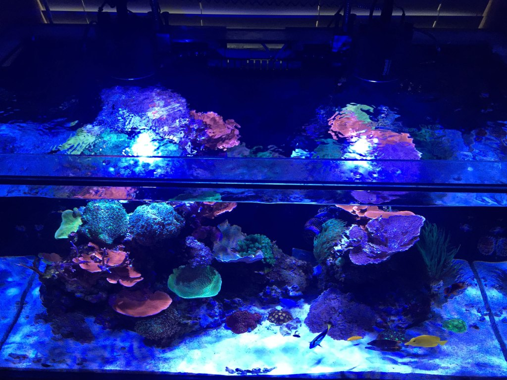 thomas soraci reef tank