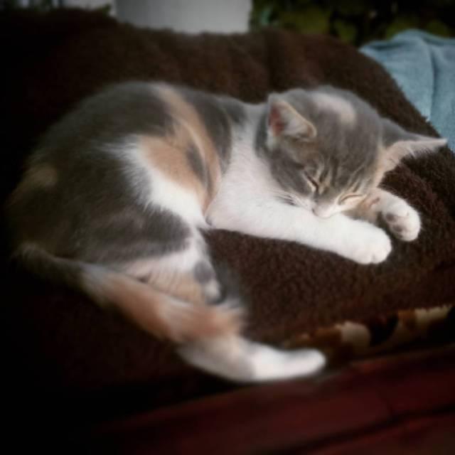 Mechas durmiendo tan ricamente que envidia que a gusto esthellip