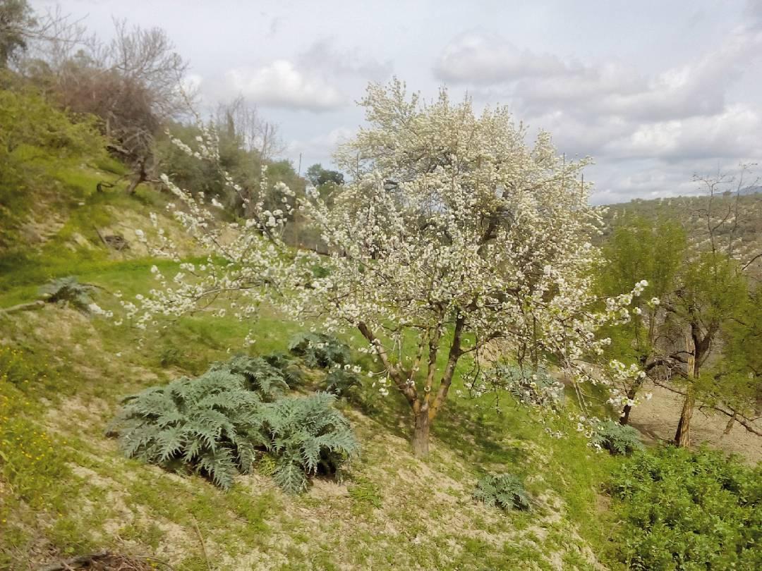 Biodiversidad cultivada en la tierra del olivo el mayor monocultivohellip