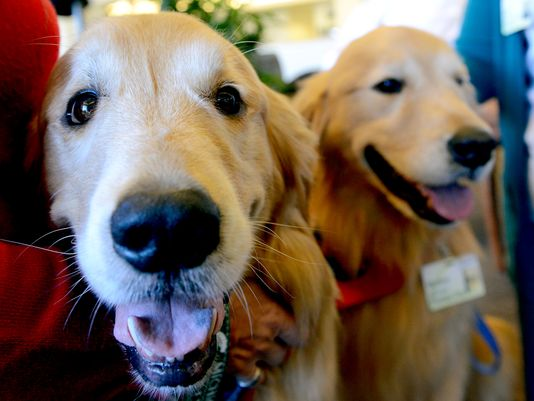 635941658116162711-SparrowTherapyDogs-1