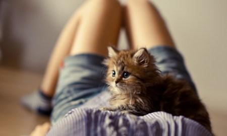 15 забавных комиксов про отношения кошек и людей