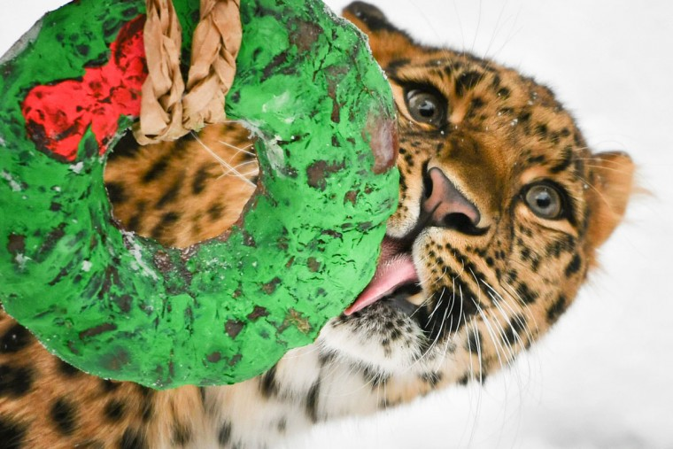 tns_life-pets-hdy-leopard-gifts-1-ms-760x507