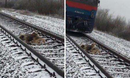 dogs-train-railway-tracks-ukraine-coverimage