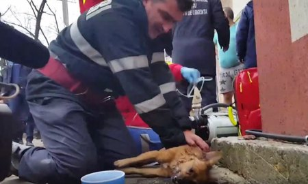 firefighter-saves-dog-gives-cpr-romania-1