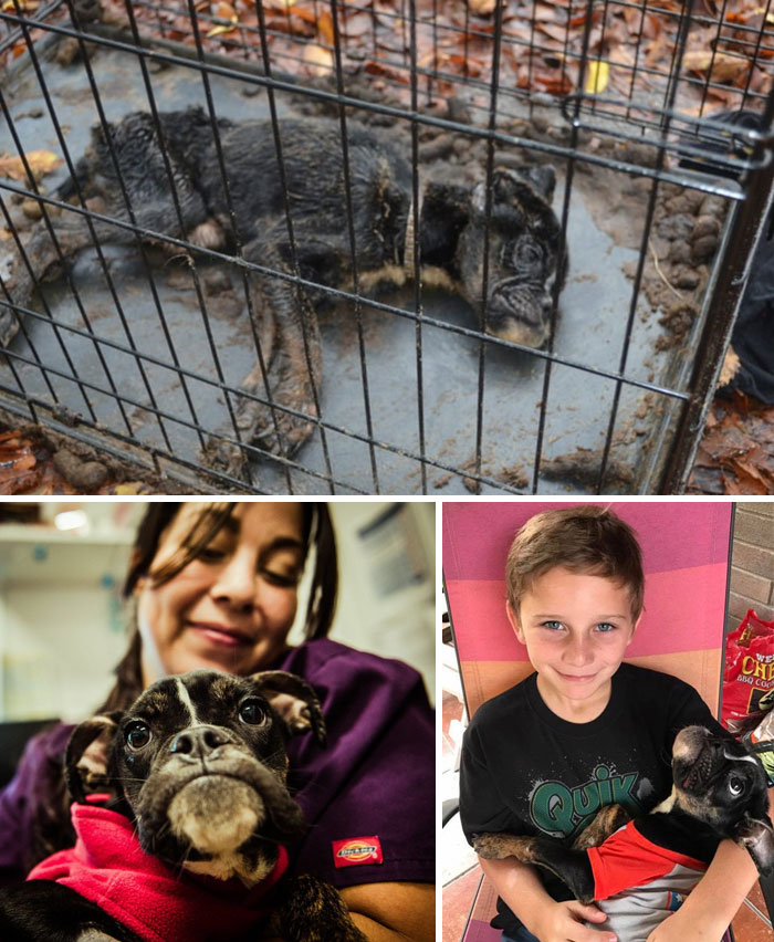 animals-good-news-faith-in-humanity-restored-2016-119-58638bfc13680__700
