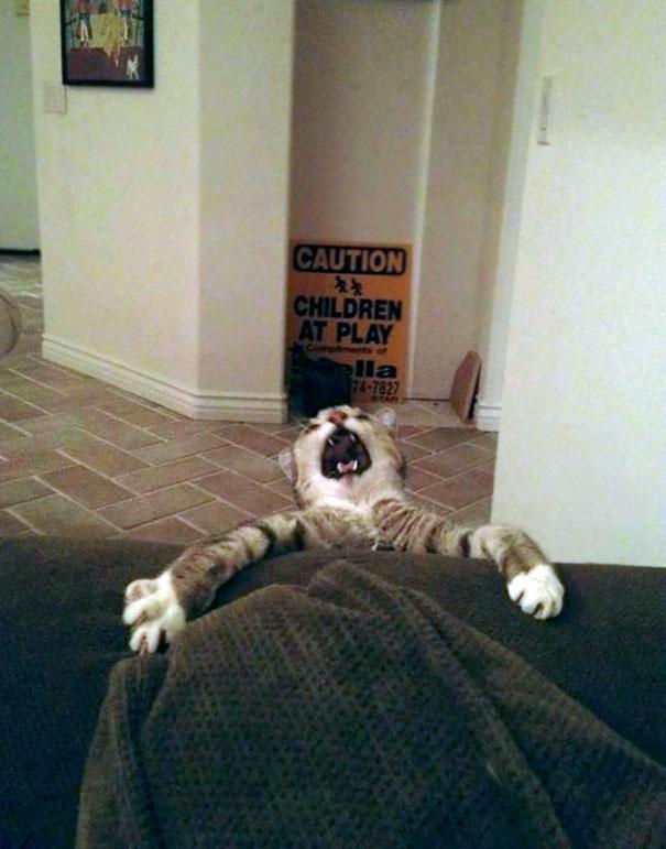 funny-animal-fails-2-586a732de858b__605