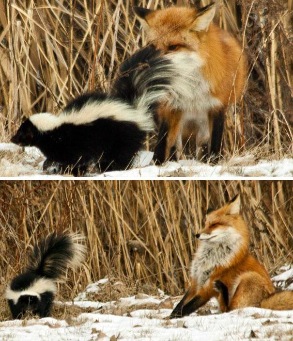 funny-animal-fails-47-586d078781b6d__605