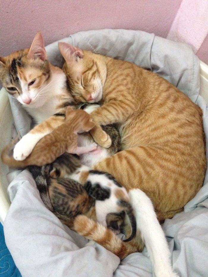 Father-Cat-Supports-Mom-Cat-Giving-Birth-Wins-Everyones-Hearts-58b00f5fd6ade__700