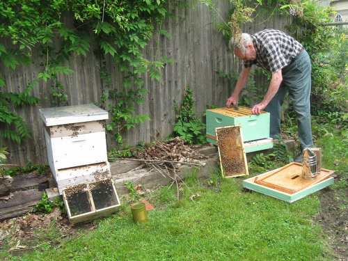 The Farm Gets a Second Hive of Bees