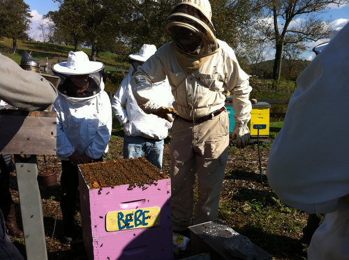 Bee Class at Stone Barns