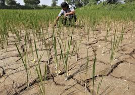 PLIGHT OF THE FARMERS FACING DROUGHT CONDITION IN INDIA