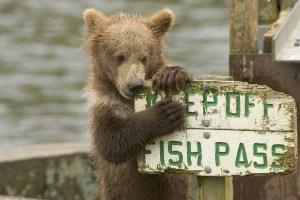 bear-680334_1920