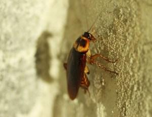 lf-bug-834021_640