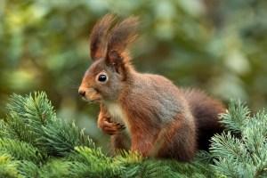 squirrel-619968_640