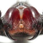 毒グモの種類はどんなのがいる?【画像】世界・日本の毒グモたち!
