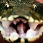 ヘビの種類一覧!【画像】日本・海外のいろんなヘビをどうぞ!