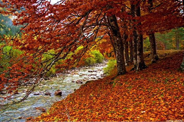 Selva de Irati en otoño