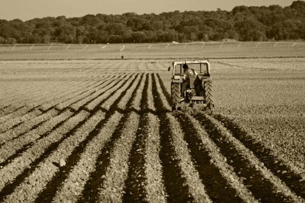 Agricultor arando con tractor
