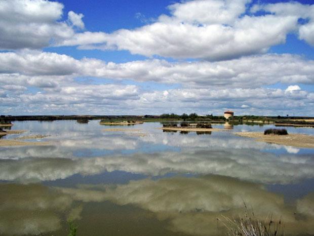 Reserva de las Lagunas de Villafáfila, Zamora