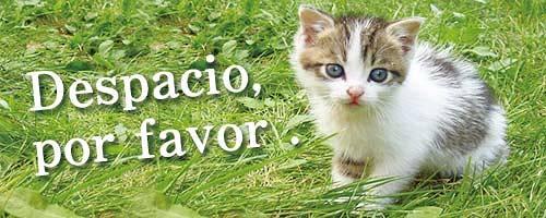 スペイン語 猫