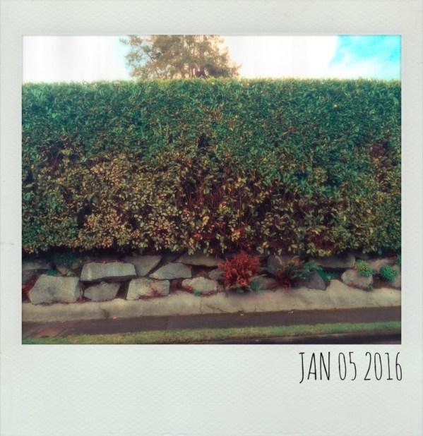 Polaroid Jan 5