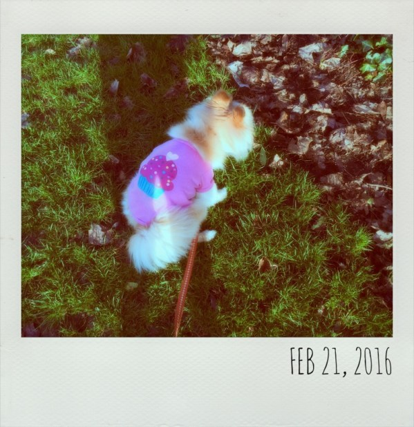 Polaroids - Feb 21