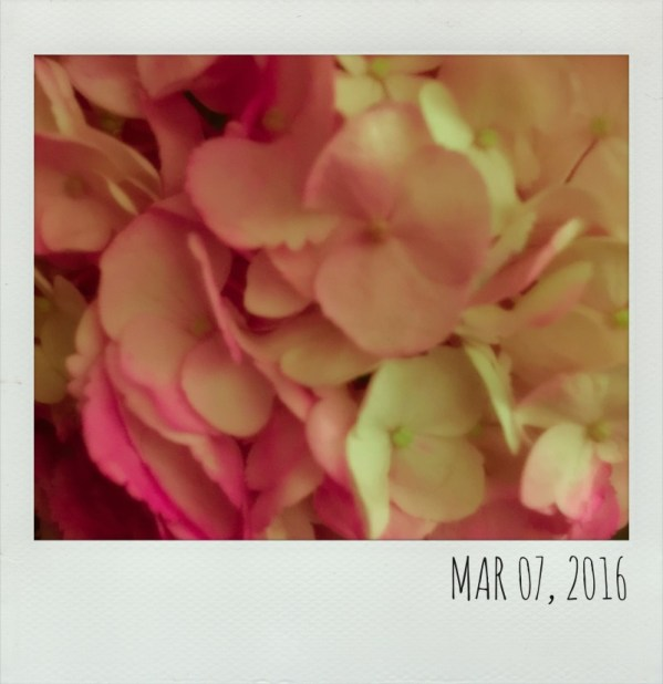 Polaroid  Mar 7