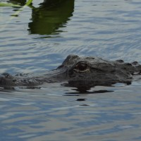 Fort Lauderdale, Florida: Airboat Ride at Everglades Holiday Park