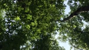 folk-fest-trees