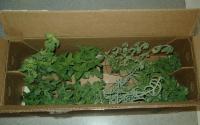 mint plants and Italian seasoning