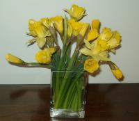 Daffodils from Kelli