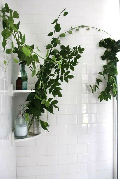 Φυτά και στο μπάνιο!