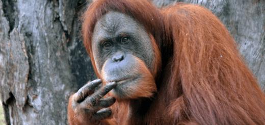 mądra małpa - wszyscy jesteśmy zwierzętami - spisek pisarzy