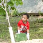 Taking care of our trees