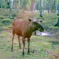Småland: Elche, Pippi Langstrumpf und Schwedens südlichste Wildnis