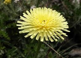 Poids ideal comment l 39 obtenir avec l 39 aide des plantes for Maigrir avec des plantes