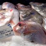 fish at central market