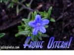 oster-karte-irischer-fruehling-02