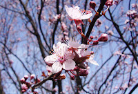 April Blog Round Up, April Flowers Edition