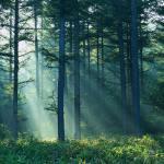 Nature Inpires