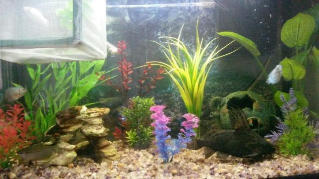 90L Fish Tank | United Kingdom | Gumtree
