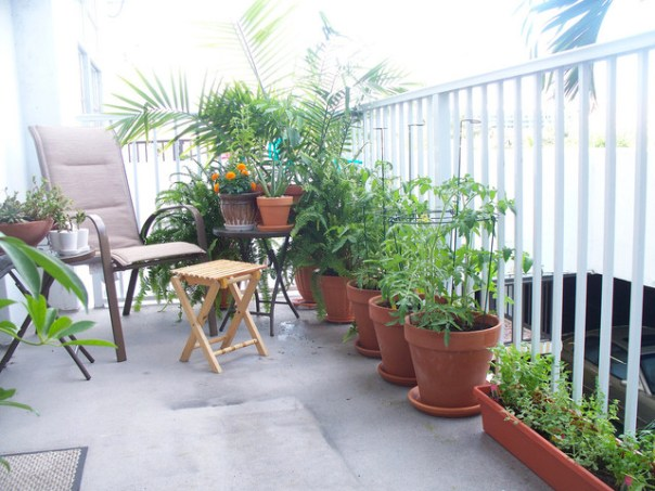 Pequenos jardins pátio