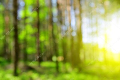Green natural background of out of focus forest — Stock Photo © vencav #109066482
