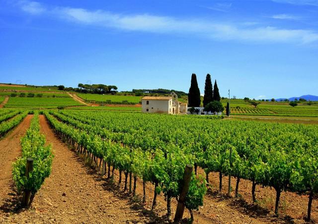 Ruta del vino Penedés https://www.flickr.com/photos/angela_llop/