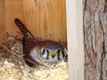 Stable View Owl Naming Contest Winner!