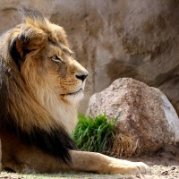 Foto Friday: The Observant King