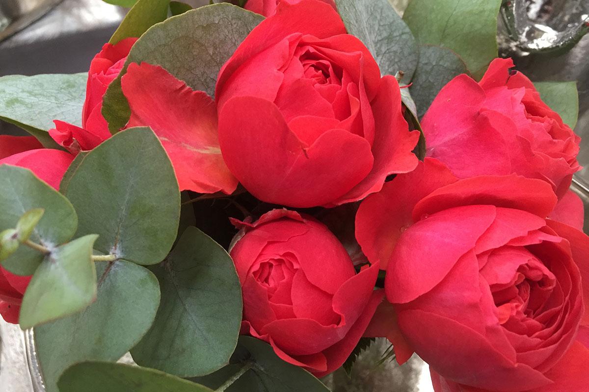 Rosenpracht  ©Pflanzenhof Schürg, Wissen